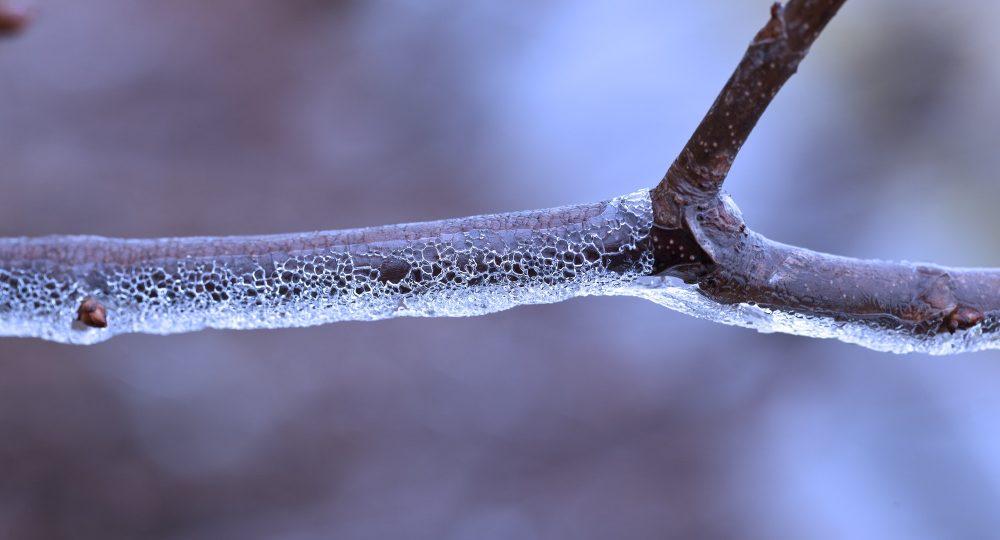 Freezing Rain on Tree Branch